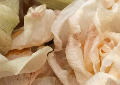 'petals gathering'