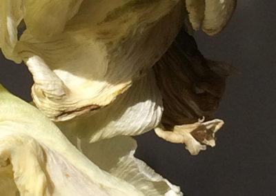 'swirling white'